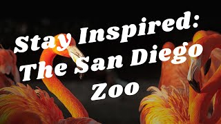 Balboa Park to You - Stay Inspired: The San Diego Zoo