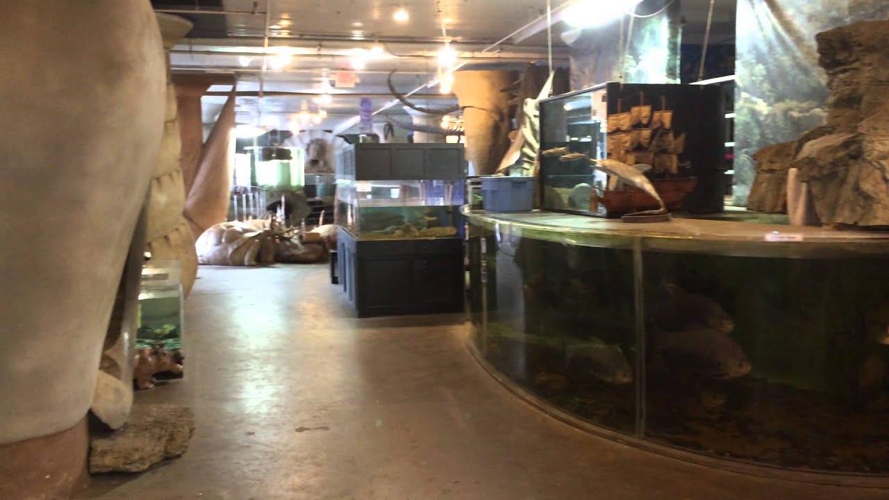 St Louis Aquarium at City Museum 2015 - YouTube
