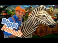 Blippi and Jungle Animals | Explore with BLIPPI!!! | Educationals for Toddlers