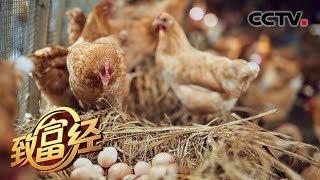 《致富经》 20190803 大巴山里的创业夫妻档| CCTV农业
