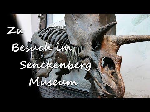 Im Senckenberg Museum Frankfurt | 4K Vlog Deutsch | Juli 2017