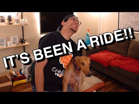 Greyhound Adoption - One Year Later