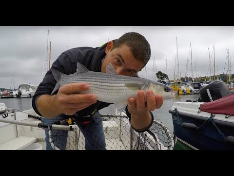 Marina Fishing For Mullet - Catching Mullet With Bread