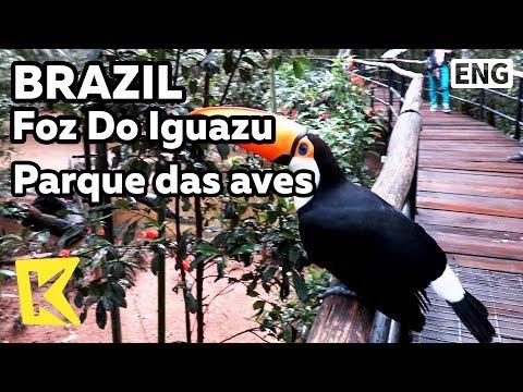【K】Brazil Travel-Foz Do Iguazu[브라질 여행-포스두이구아수]이구아수 새공원/Parque das aves/Bird/National Park/Toucan