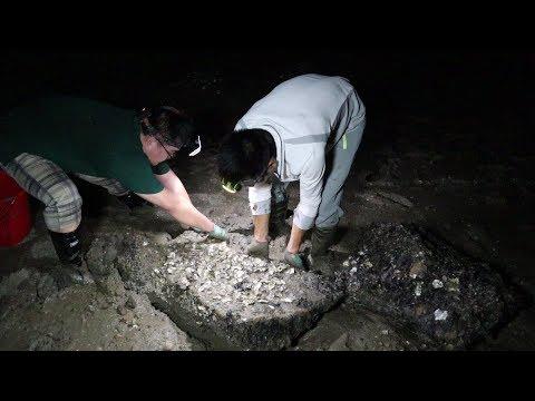 阿烽夜里去抓上岸换壳的青蟹,这种蟹非常值钱美味,全给湖南网友尝鲜