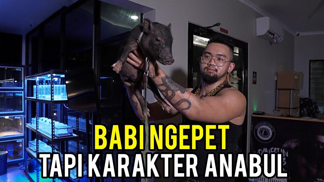 Download PROSES CEPAT MENJINAKAN BABI NGEPET OLEH KING OF THE JUNGLE!!
