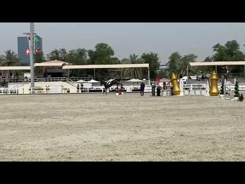 Z7 ASCOT   Dubai Polo and Equestrian Club   2* 1.35