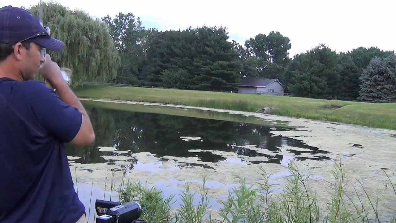 Bass fishing with topwater frogs largemouth bass youtube for Topwater bass fishing