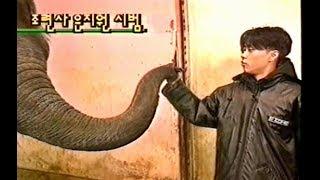 젝스키스 SECHSKIES - 스타배우러간다 (코끼리조련) ※화면조정주의