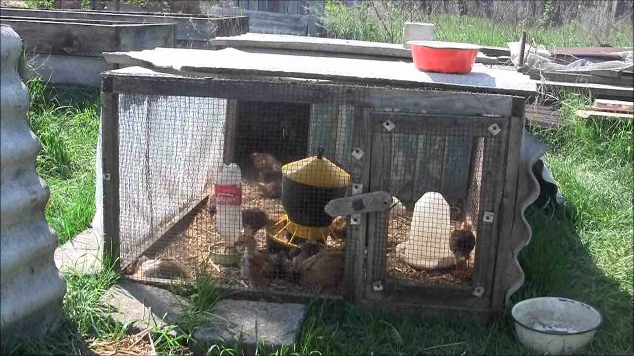 Цыплятник своими руками
