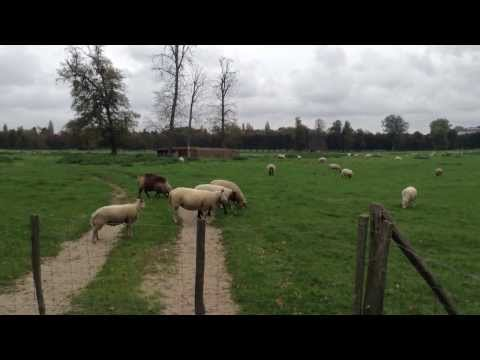 Versailles, France - Sheep farm near Petit Trianon