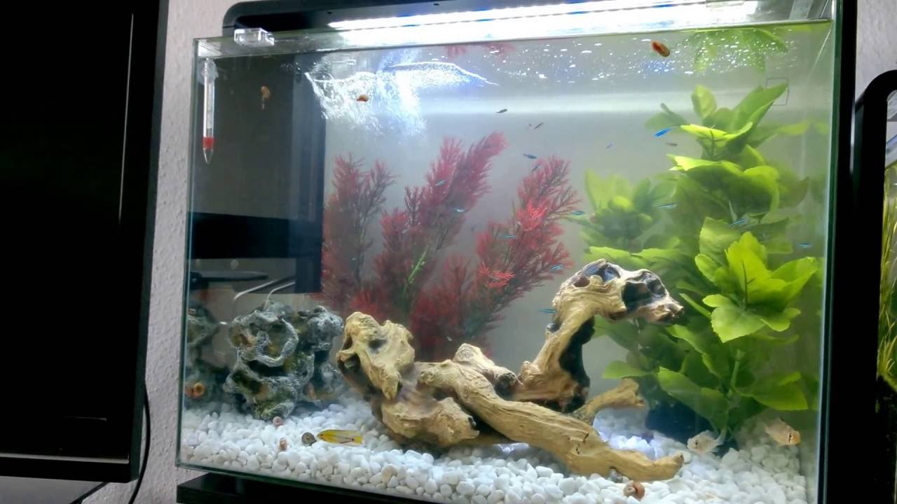 e6f4639a0bd SuperFish Home 80 - Aquarium - YouTube