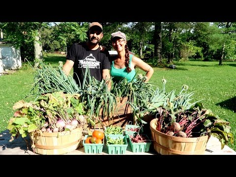 1st Organic Garden Harvest- Summer 2018