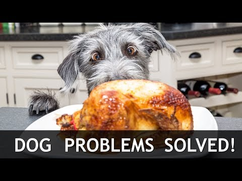 How to Solve YOUR Most Common Dog Training Problems Barking, Stealing, Potty Training, Anxiety