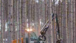 Timberline Forestry presents Michigan Red pine thinning