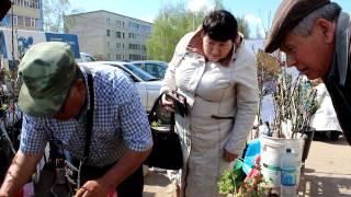 видео где купить саженцы плодовых деревьев