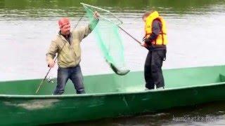 Рыбалка на Камчатке видео - ловля кеты(Кета – второй по численности вид дальневосточных лососей после горбуши. До недавнего времени считалось,..., 2016-02-04T02:50:27.000Z)