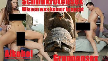 WWKB #4 II Von Schildkröten Sex, Gruppensex und Alkohol II Livestream? II Wissen was keiner braucht