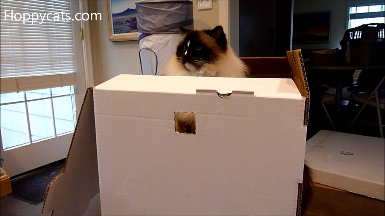 Cardboard House For Cats Ragdoll Cats Receive Kitty Cubby Cardboard Cat House