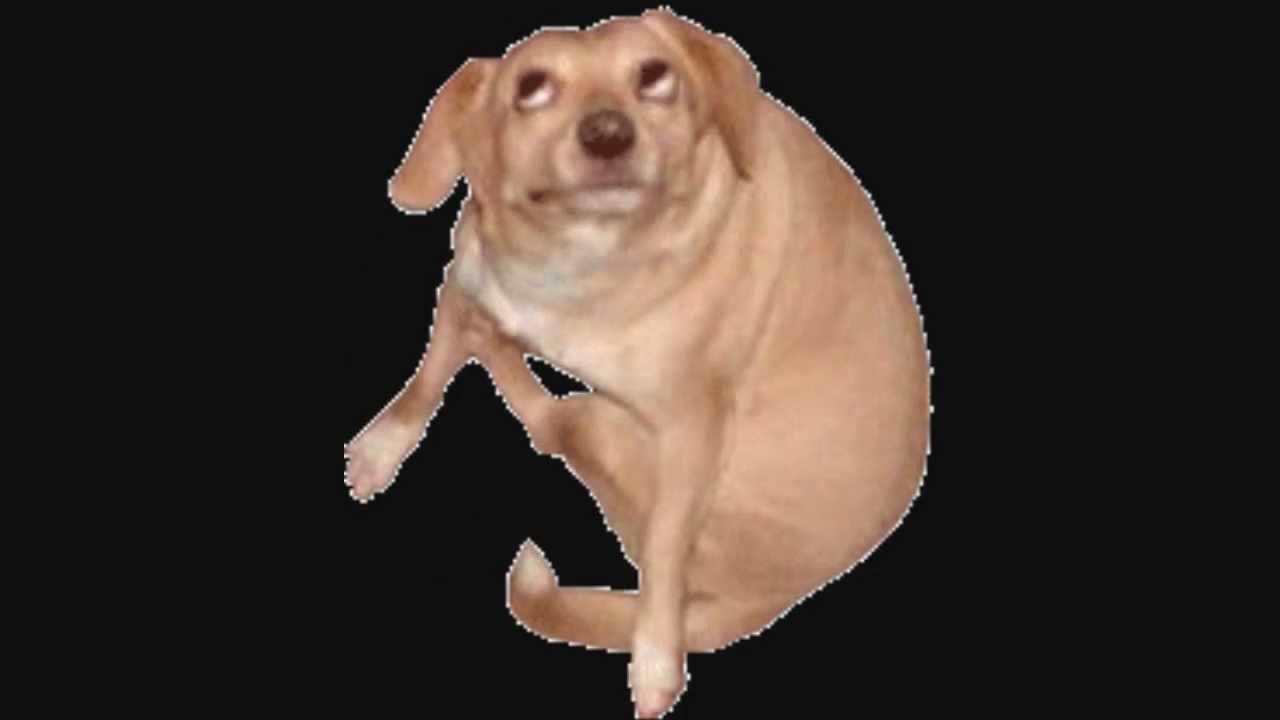 Derpy Dog Video Original