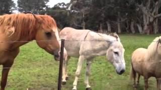 Dog, Cow, Horse, Donkey And Pony