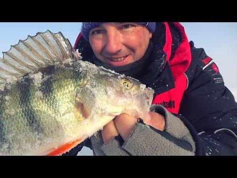 ОКУНЬ ПРИСТРЕЛИЛСЯ! ЗАТО НА КОМБАЙН ПОШЛА ОТБОРНАЯ ПЛОТВА !Рыбалка в глухозимье.