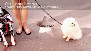 Страх Перед Собаками.Социализация.