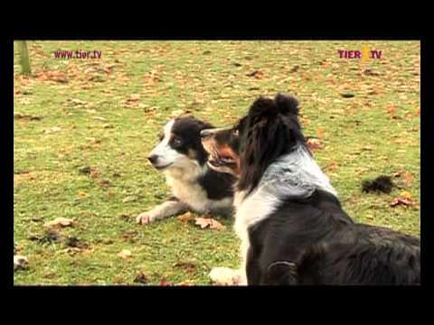 Die Faszination mit Hunden zu arbeiten - TIER.TV Reportage - Trailer