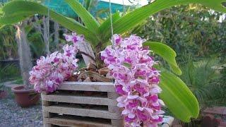34 loài hoa lan rừng đẹp nhất hiện nay