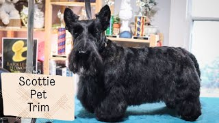 How to Do a Pet Scottie Trim | with Master Groomer