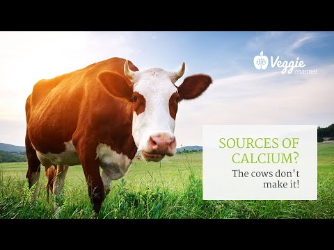 The cows don't make calcium Neal Barnard, MD