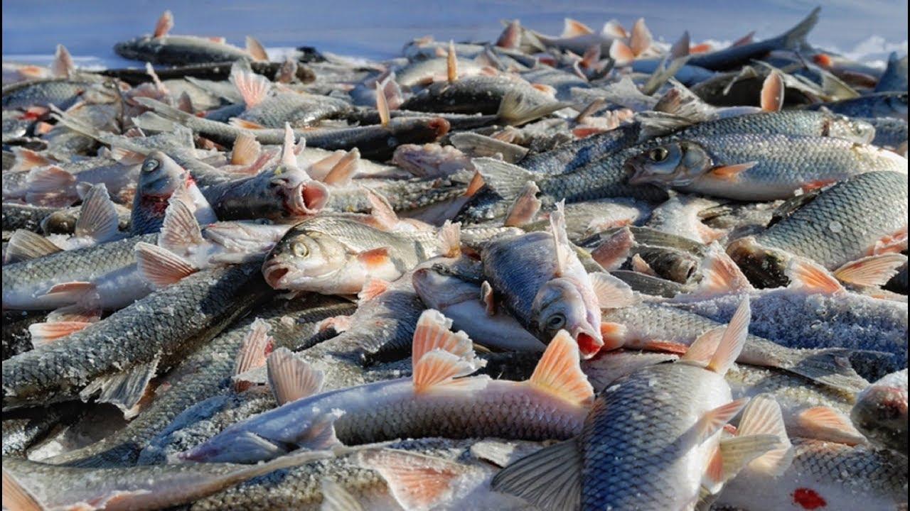 картинки где много рыбы каждая ступеней это