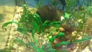 Клип: рыбки же интересные