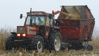 Fiat 130-90 Turbo DT Chopping Corn w/ Taarup 622 During a Snowstorm | Häckseln 2018 | Danish Agri