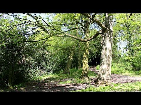 Relaxační Hudba-les A Zpěv Ptáčků (Relaxační Video S Klidnou Hudbou)