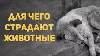Для чего страдают животные? Священник Максим Каскун