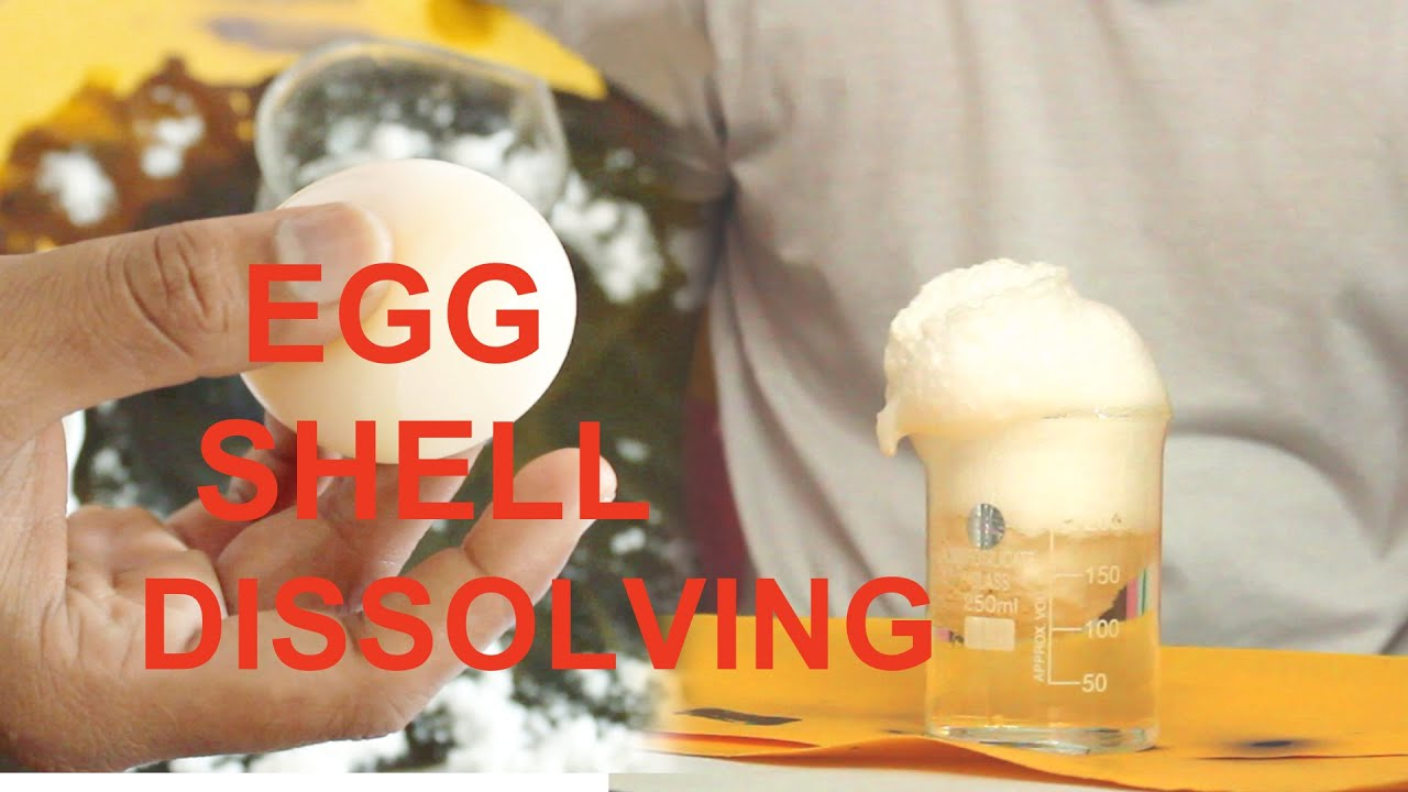 Egg Shell Dissolving Using Hcl And Water Youtube