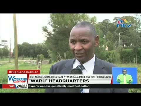 Over 80% of the potatoes consumed in Kenya come from Nyandarua