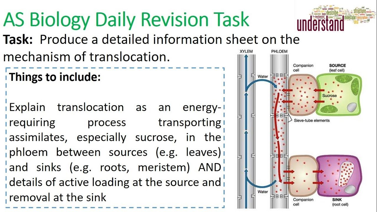 AS Biology Daily Revision Task 83 - YouTube
