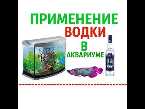водка в аквариуме польза или вред