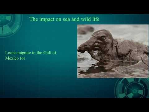 BP oil spill final