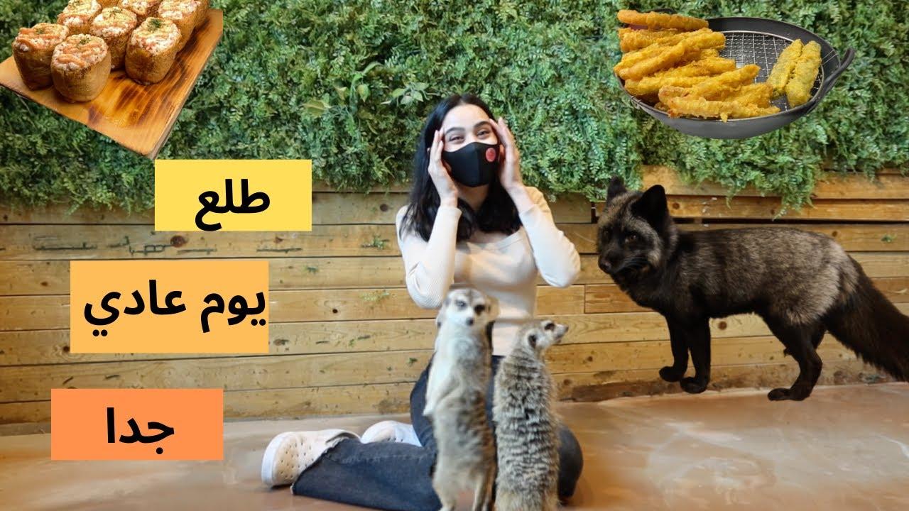 I visited a zoo and had my last iftarزرت حديقة للحيوانات وتناولت الإفطار الأخير