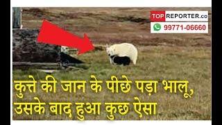Polar Bear vs Dog Fight video is going viral | News station