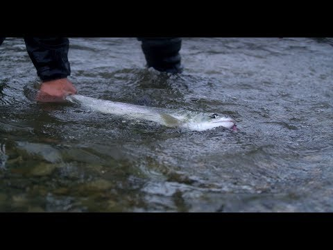 Fishing BC Presents: Late Fall Fishing In The Fraser Valley