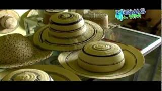 Sombrero pintado - Formas de vida Panama