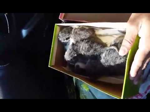 Man Saves Kittens from a Cruel Death (Good Work, Brother)
