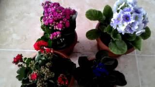 Çiçek dikimi nasıl yapılır nelere dikkat edilmeli?