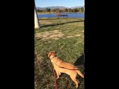 Dog Walking in Lake Balboa Park Take 2 - pt 2