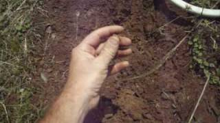 metal detecting a gold nugget patch