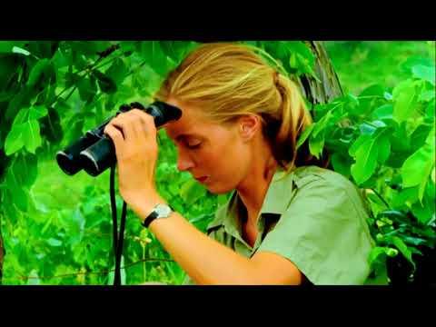 TimesTalks | Dr. Jane Goodall and Brett Morgen